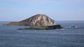 Królik wyspa zdjęcie wideo
