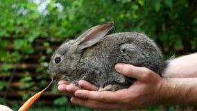 królik Żywieniowy zwierzę zbiory wideo
