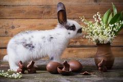 Królik z czekoladowymi jajkami i kwiatami fotografia stock