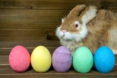 Królik z kolorowymi Wielkanocnymi jajkami Zdjęcia Stock