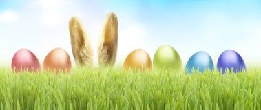 królika Easter trawa fotografia royalty free