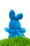 królika Easter trawy zieleń obraz stock