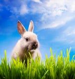 królika Easter trawy zieleń trochę Obraz Stock
