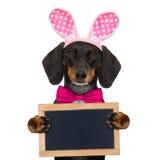 Królika Easter ucho pies Obrazy Stock