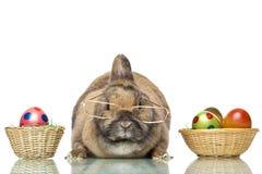 królika kolorowi śliczni Easter jajka zdjęcia stock