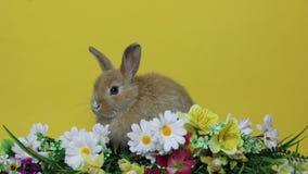 Królika królik na kwiatach zdjęcie wideo