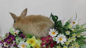 Królika królik na kwiatach zbiory wideo