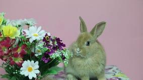 Królika królik na kwiatach zbiory