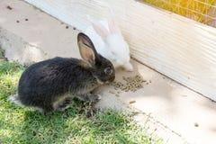 Królika królik w ogródzie obrazy stock