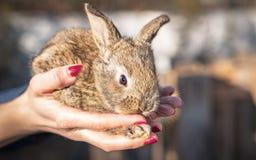 królika mały śliczny Zdjęcie Royalty Free