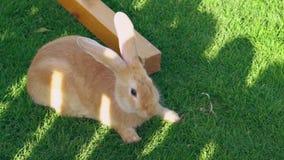 Królika obsiadanie na zielonej trawie i je je zbiory wideo