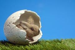 królika zjadacza jajko Obraz Royalty Free