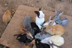 króliki Obraz Stock