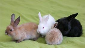 Króliki czołgać się na zielonej podłoga, mali śliczni colourful zwierzęta zabawę, mali puszyści króliki zbiory