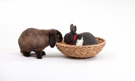króliki Easter Fotografia Royalty Free