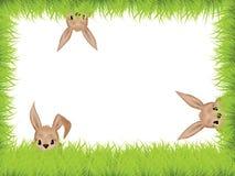 króliki Easter Obraz Royalty Free