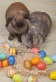 króliki Easter dwa Zdjęcia Stock