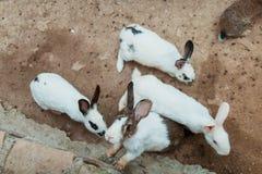króliki Przyroda, zwierzęta Zdjęcie Stock
