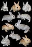 króliki ustawiający Obraz Stock