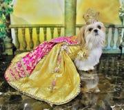 Królowa Luci fotografia stock