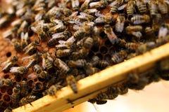 Królowych pszczoły Fotografia Stock