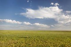 Krótka trawy preria w Kolorado Zdjęcie Stock
