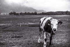 Krów chmury i pola Obrazy Royalty Free