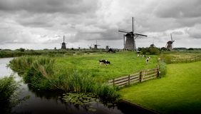 krów nabiału wiatraczki Obraz Stock