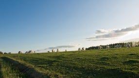 krów pola krajobraz Zdjęcie Royalty Free