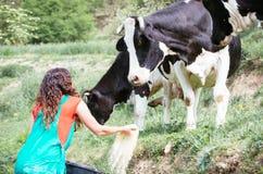 krów rolnika karmienie Fotografia Royalty Free