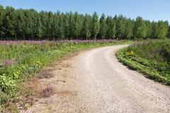 Krökt grusväg med blommor och skogen Arkivfoto