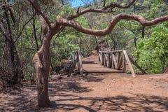 Krökt krokigt träd, träbro och röd jord i kommunalt M fotografering för bildbyråer