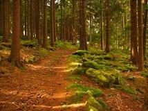 krökt skogväg royaltyfri fotografi