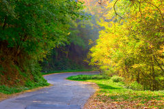 krökt skogväg Royaltyfri Bild