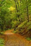 krökt skogväg för höst Arkivfoto