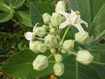Kröna blomman för girlanden, som använder några thailändska traditionella, Hadyai, Thailand Royaltyfria Bilder