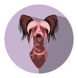 Krönad hund för vektor kines Plan illustration Arkivbilder