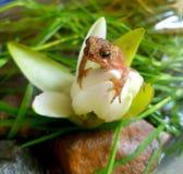 Kröte auf einer Blume lizenzfreie stockfotos