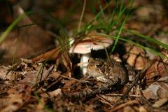 Kröte und Pilz Stockfotos