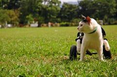 Krüppel-Katze im Rollstuhl Stockbilder