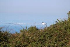 Krążownik w zatoce obraz royalty free