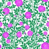 Kręcone fiołkowe róże royalty ilustracja