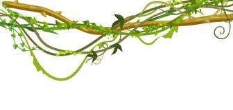 Kręcony dziki lian gałąź sztandar ilustracji