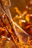 Kręcony Spider& x27; s sieć fotografia royalty free