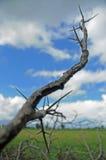 kręgosłupy Fotografia Stock