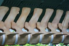 kręgosłupy wielorybi Zdjęcia Stock