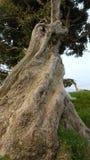 Kręcenia drzewo Fotografia Royalty Free