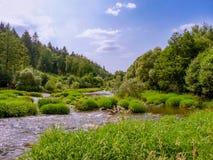 Kręcona rzeka z trawiastymi wyspami Zdjęcie Royalty Free
