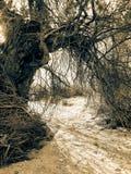 Kręcony Archway Zdjęcia Stock