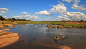 Krà ¼ ger Nationalpark Arkivfoto